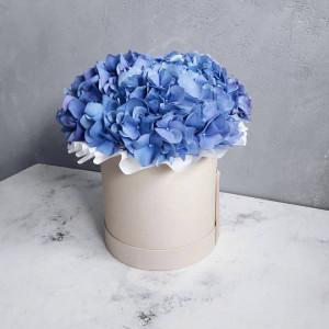 Голубая гортензия в шляпной коробочке